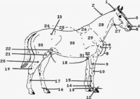 The Parts of the Horse - Test Yourself